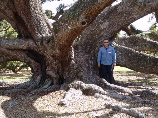The e o hunt oak located at the south ms regional center in