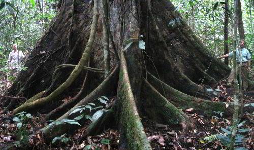 Bagaimana pokok diberi nama?